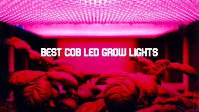 Best COB LED Grow Lights